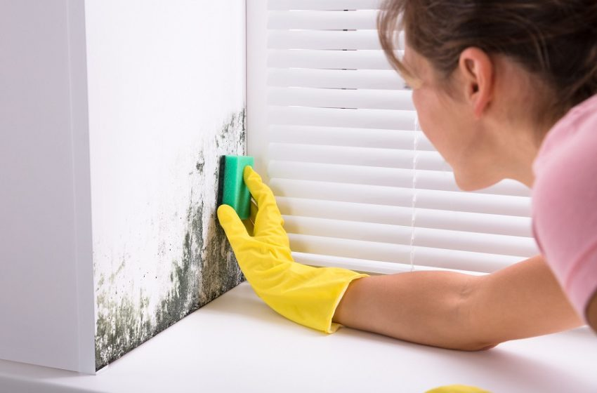 Control Mold and Mildew of Your Home