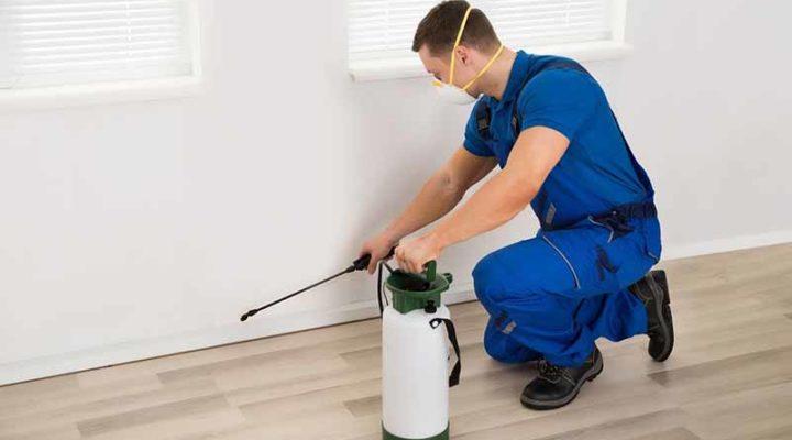 Tips To Hire A Termite Control Service