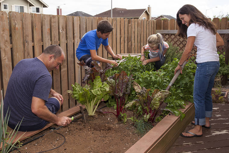 Things You Can Do To Improve Your Garden at Home