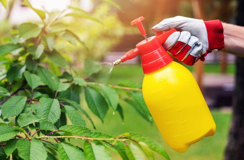 Best garden sprayer for your garden to maintain your yard