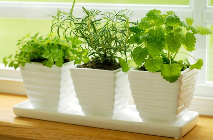 How To Grow Fresh Herbs at Home